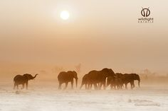 Wait for me by Wildlight  Safaris on 500px