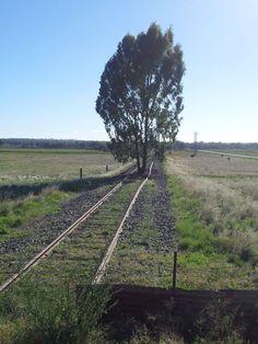 A train hasn't been through here for awhile.  Gillenbah/Narrandera Australia