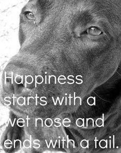 a dog is happiness