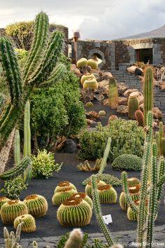 Il Giardino dei Cactus è una delle tante opere che Cesar Manrique, poliedrico artista spagnolo, ha voluto regalare alla sua isola natale, Lanzarote.