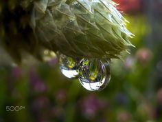 macro | Water Mirror | by suechan_0514 | http://ift.tt/1ZYSNxR