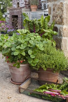 breathe: outdoor kitchen with fresh garden vegetables and potted herbs