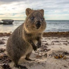 """I like you. I shall keep you and call you Ingrid."" 