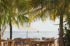 Palmtrees, Ocean Breeze and Wooden Garden Set. Feel the sun on your face, or hide under one of our sun umbrellas - Restaurant Scuba Lodge