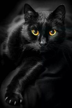 Katze (21)