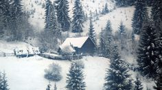 best free photos nature winter