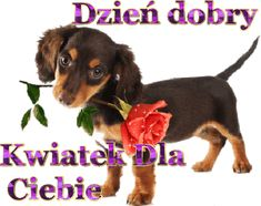 Beautiful Dogs, Good Morning, Humor, Pictures, Cute Dogs, Bom Dia, Photos, Buen Dia, Humour