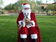 Chase: Santa, I've been good, really!