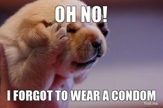 Be safe Be wise Wrap it up! #puppy #condom #forlife #safelife