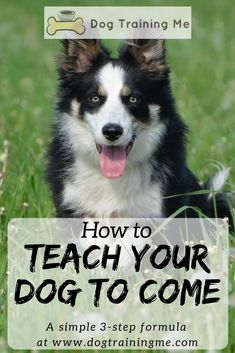 Dog Obedience Training How to teach your dog to come with this simple formula. We give you some helpful tips on recall training that will make your next trip to the park fun for you both. Read our article for more. Training Your Puppy, Dog Training Tips, Potty Training, Agility Training, Dog Agility, Training Classes, Training Equipment, Teach Dog To Come, Dog Minding