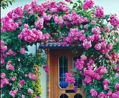 Rent Pergola For Wedding Backyard Gates, Beautiful Flowers, Beautiful Pictures, Simply Beautiful, Rose Arbor, Colorful Roses, Purple Flowers, Pink Roses, Cheap Pergola