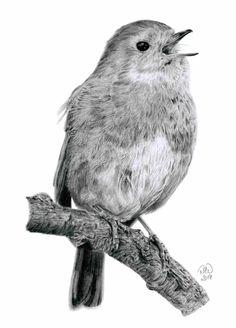 Bird Pencil Drawing, Bird Drawings, Animal Drawings, Graphite Art, Graphite Drawings, Wildlife Paintings, Wildlife Art, Hummingbird Pictures, Bird Sketch