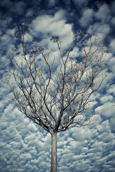 ~~Under a Sheltering Sky | cloud-filled blue sky tree landscape, Meco, Madrid, Spain | by una cierta mirada~~