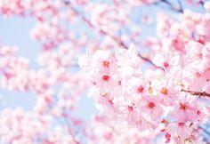 さぁ、考えよう! Let's think! – 1Day BLOG~1日ひとつの学びで、ネットで稼ぐ~ Lets Do It, Let It Be, Decision Making, Life Hacks, Flowers, Plants, Cooking, Pictures, Cherries
