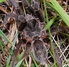 Arana en Tandil. Spider