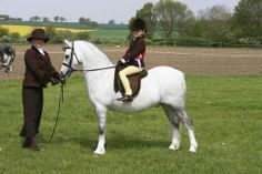 View all the pictures from Horse & Hound's visit to the The Showing Register Spring 2014 at http://www.horseandhound.co.uk/galleries/v/showing/shows/the-showing-register-spring-2014/ #pony #horse #riding