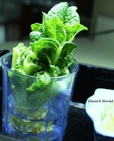 growing lettuce from stems in water - The Old Farmers Almanac Types Of Lettuce, Head Of Lettuce, Gardening For Dummies, Gardening Tips, Growing Lettuce, Old Farmers Almanac, Red Leaves, Vegetable Salad, Food Diary