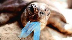 Proponen minimizar el uso de la bolsa plástica en Puerto Rico. http://www.miprv.com/proponen-minimizar-el-uso-de-la-bolsa-plastica/