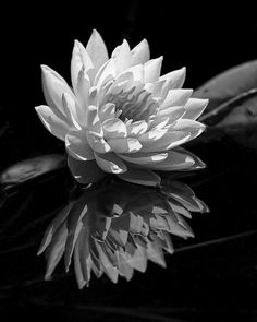 I'm such a fan of B&W work. And this one is spectacular.  Enjoy  By Dawn Currie - Floral in B&W