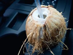 On the north shore of Oahu we found a stall selling fresh coconuts you could drink out of! we got some to sip on while waiting for our shrimp from the Giovanni's shrimp truck. Delicious!