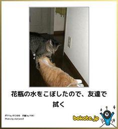ふきふき : 笑える!!ネコでぼけてv bokete(猫)まとめ - NAVER まとめ