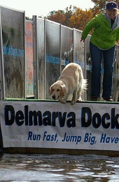 Maisy in Dock Dogs competition! We are so proud of Maisy and all she's accomplished so far at such a young age (She's just 1 year old!-_Ryder's Sibling!) Seaside's Christmas Amazement
