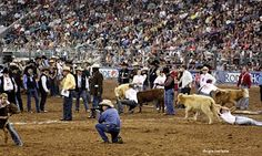 Calf Catch ~ Houston Rodeo ~ Not lettin go this is my favorite part of the rodeo when the kids come out to try and catch a calf