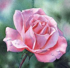 AS FRESH AS MAY rose floral watercolor painting, painting by artist Barbara Fox Art Watercolor, Watercolor Landscape Paintings, Watercolor Flowers, Painting Flowers, Flower Paintings, Watercolor Pencils, Watercolours, Art Floral, Fox Art