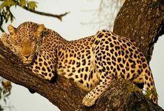 33 Adorably Sleepy Animals
