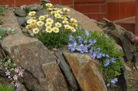 Crevice garden~~~amazing.