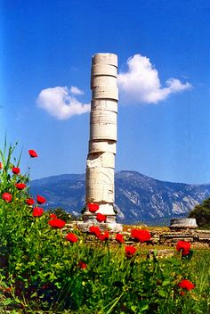 Ancient column and poppies, Greece