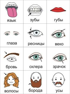 body parts pt 2 Russian Language Course, Russian Language Lessons, Russian Lessons, Russian Language Learning, Language Study, Russian Love, How To Speak Russian, Learn Russian, Alphabet Writing