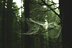 spiderwebs- imagine some kind of spider mutt or something