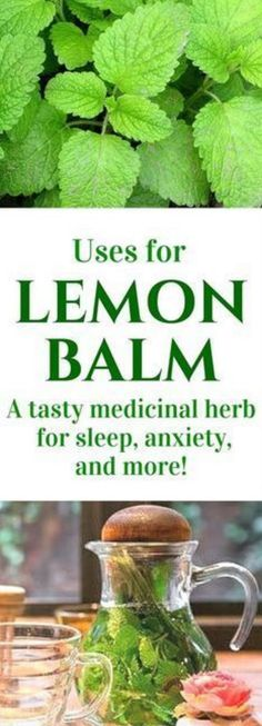 Lemon balm is an amazing herb that deserves a place in your garden and herbal remedy arsenal. Click to find out more or pin to save for lat...