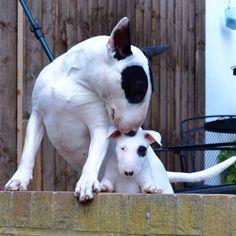 So cute! #bullylove