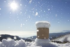 Mushrooms on the snow
