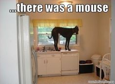 There was a mouse... I swear...   Happy, Healthy and Protected #cats and #dogs