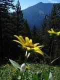 yellow flower foreground