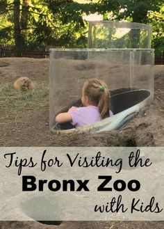 Tips for Visiting the Bronx Zoo with Kids