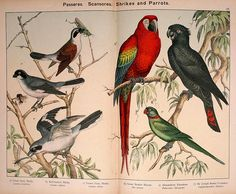007-Natural history of the Animal kingdom for the use of young people ..- William Forsell Kirby-1889