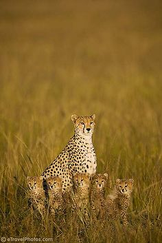 Cheetah with 5 cubs by Tony Costa (UK), via Flickr. I don't know where this is, but it looks like hope to me.