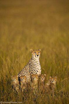 i LOVE baby cheetahs!