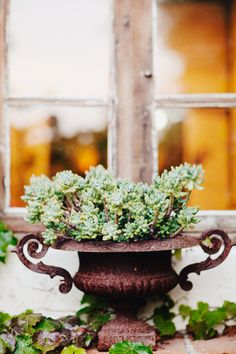 urn with succulents