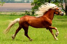 Have you ever been real passionate about something? That's how I feel with horses.RIDEON!