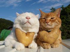 CAT_LUV
