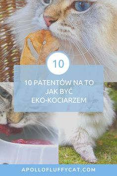 Naprawdę niewiele wystarczy, aby poprawić swój wpływ na środowisko. Wystarczy, że zastosujesz kilka z moich patentów a staniesz się odpowiedzialnym i ekologicznym opiekunem kota. Lifestyle, Cats, Cover, Books, Animals, Gatos, Libros, Animales, Animaux