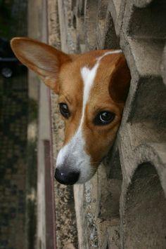 Cute DOG Angels Beloved Pet with WINGS Rainbow Bridge Clog Holey Shoe Charm