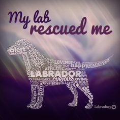 labradors.com #lab #rescue #happy