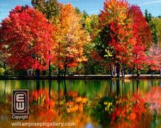 Experience fall's changing colors.....New England, maybe??