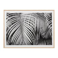 Black & White Palms